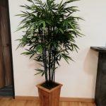 Végétalisation espace professionnel - arbre semi-naturel