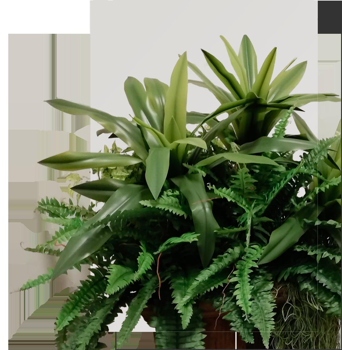 Design Végétal 974