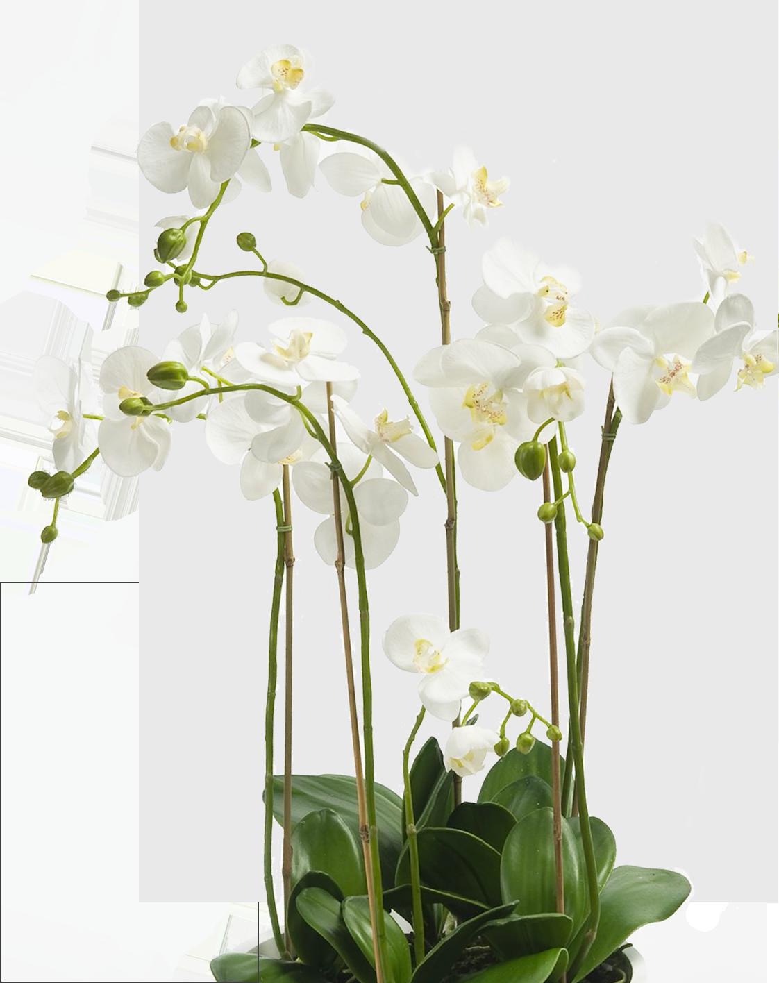 Orchidées La Réunion