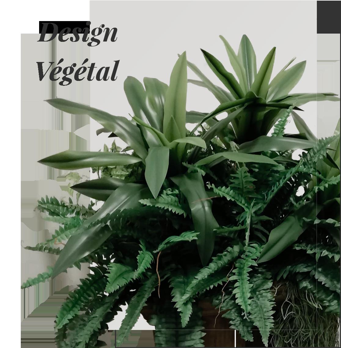 Design Végétal pour particuliers et professionnels à la Réunion 974